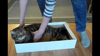 6 самых эффективных способов поймать кота; 6 most effective ways to catch a cat