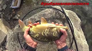 Рыбалка на карпа в ноябре Супер уловистая снасть на карпа поздней осенью карп на поплавочную удочку