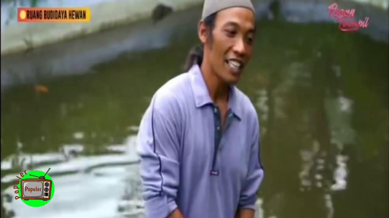 Ruang Budidaya Hewan - Ikan Nila peluang Bisnis yang ...