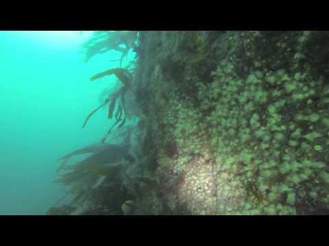 Oceanaddicts | Big Sovereign