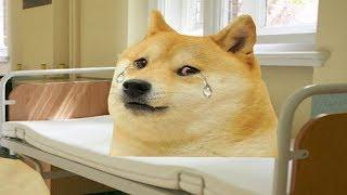 Download lagu Psie życie Psychiatryk MP3