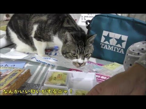 超可愛い♥高速グッパーグッパーな猫リキちゃん☆ホビーショーで買って来た安倍川もちの興味津々!リキちゃんのおみやげは?【リキちゃんねる 猫動画】Cat video キジトラ猫との暮らし