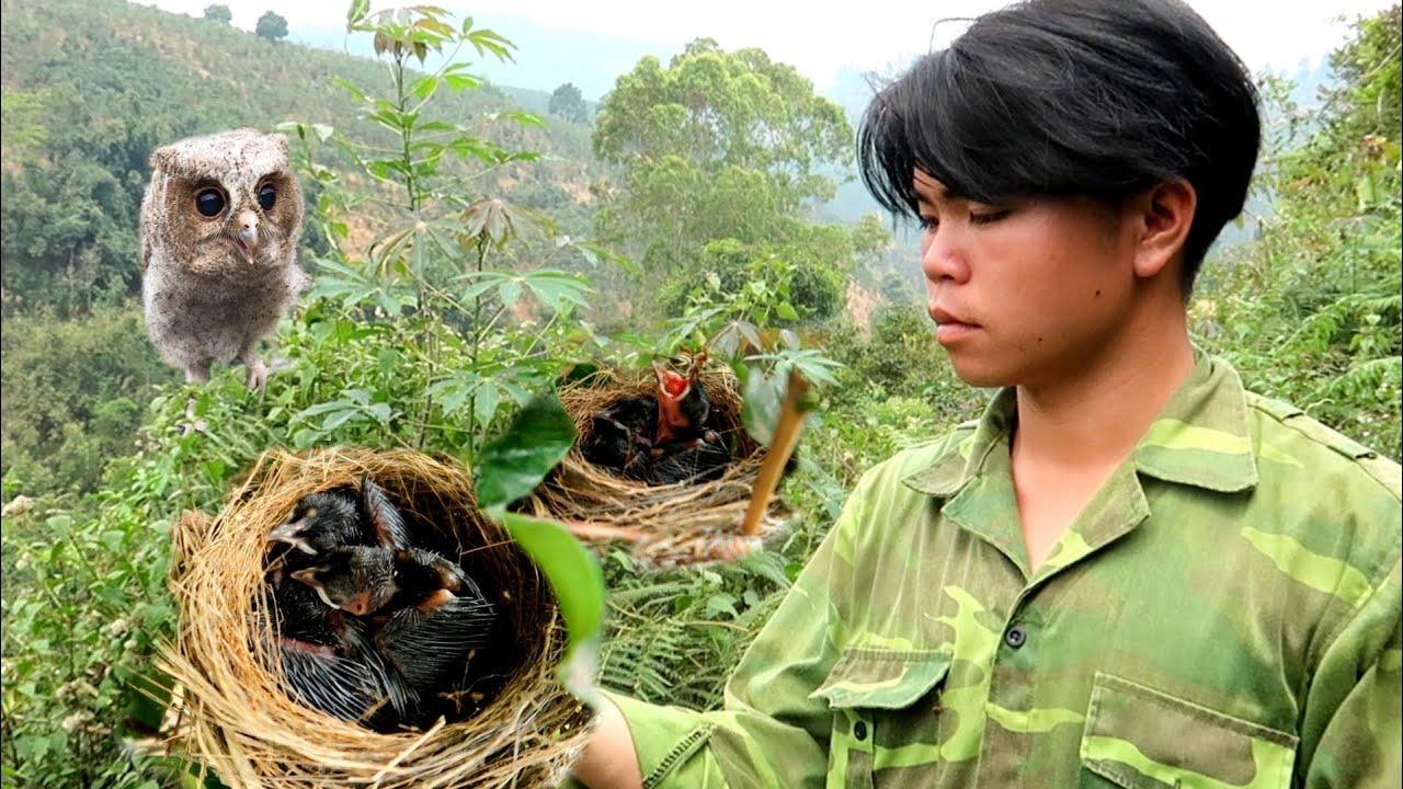 Hành Trình Tìm Tổ Chim Và Cú Mèo Bỏ Tổ | Dân Tộc Tây Bắc Tv
