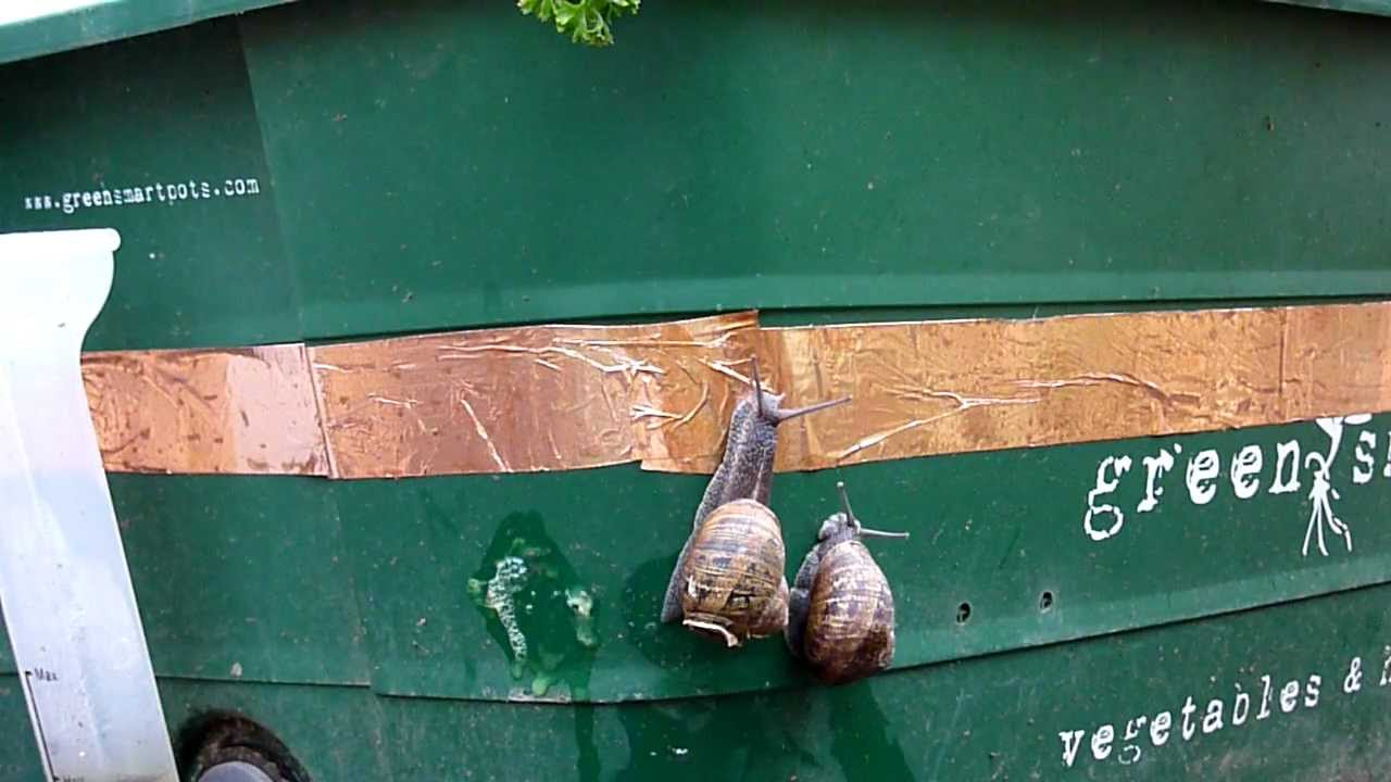 how to stop snails eating plants in pots