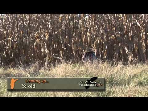 Wingshooting USA: Kansas Hunting Adventure With Scott Linden & Gov. Sam Brownback