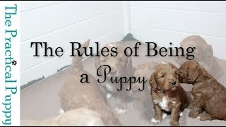 The Rules of Being a Puppy