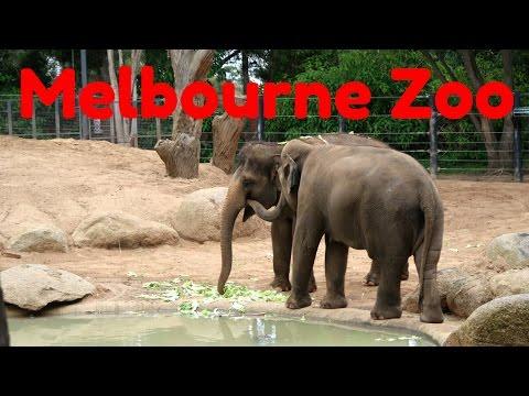 Melbourne Zoo Tour - Australia Travel Vlog
