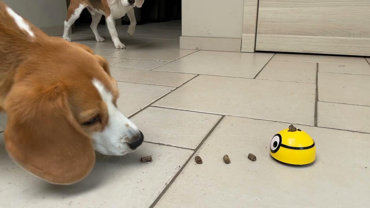 Beagles vs Mini Minion Robot