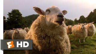 The Sheep Password
