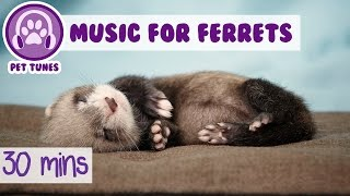 Music for Ferrets! Music to Relax Ferrets, 30 minutes of Ferret Music