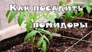 Как посадить рассаду помидор в теплицу(Как же правильно посадить рассаду помидор при высадке в теплицу или открытый грунт. Более подробно разбере..., 2015-03-15T09:19:32.000Z)
