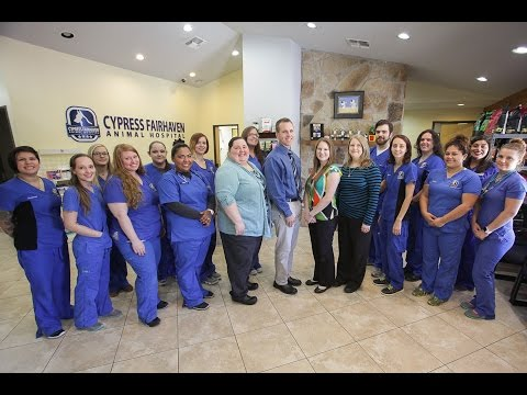 Veterinarian And Animal Hospital In Cypress, TX