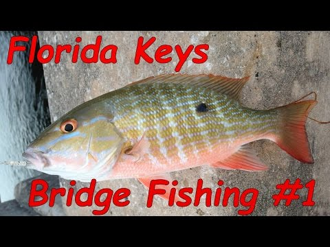 Key West Bridge Fishing - Episode #1 - Let's Get Started