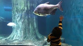 Seru Liburan ke Aquaria KLCC Malaysia Ada Hiu Belut Ikan Pari Kura kura dan banyak lagi