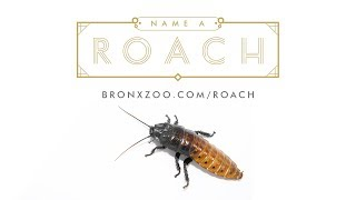 Roaches Are Forever | Bronx Zoo