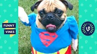 [20 MIN] SUPER DOG! Funny Animals Compilation 2018!