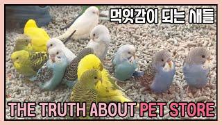 애견샵의 동물들, 펫샵공장 진실과 실체 [애완동물 분양…