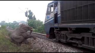 Elephant seriously ingered in train accident, next day died
