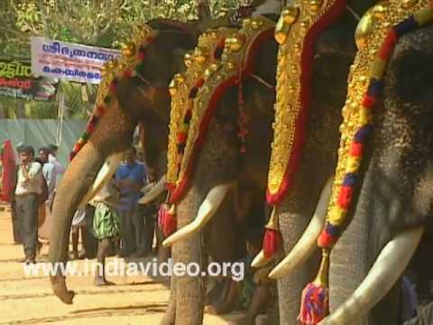 Parippally Gajamela - the elephantine festival