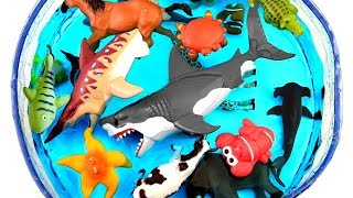 Learn Wild Zoo Animals names For Kids Safari Education Sea Animal Learn Colors