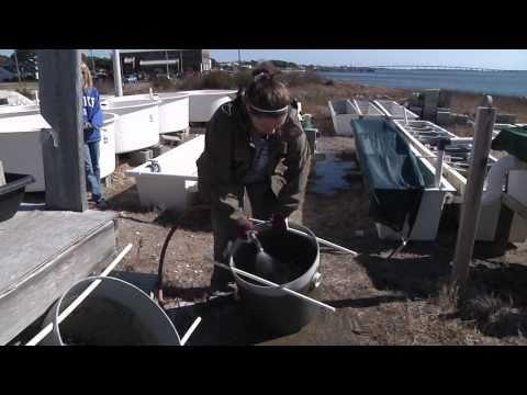 Carteret Community College - Aquaculture Technology