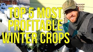 My 5 Most Profitable Winter Crops