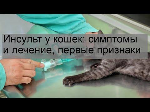 Инсульт у кошек: симптомы и лечение, первые признаки