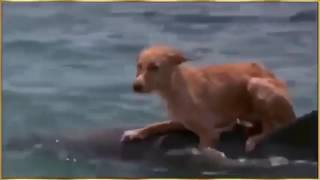 DOG best friend for DOLPHIN . DOG and DOLPHIN THE BEST FRIENDS