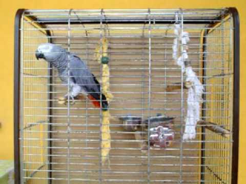 Amikor beszél a Jákó papagáj - Morgó2