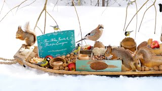 The Traveling Bird Feeder 3 -  Relax with squirrels & Birds (2-Hour special)