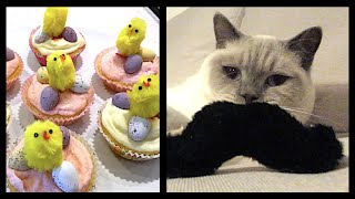 EASTER FAIRY CAKES AND CATNIP MOUSTACHE TOY!   CHRIS & EVE