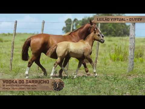 Lote 13 - Vodka do Garrucho