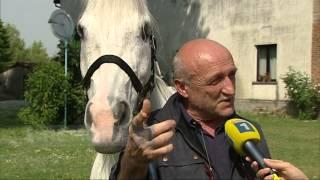 Storia di King, il cavallo dagli occhi di sole a Castelvetro Piacentino