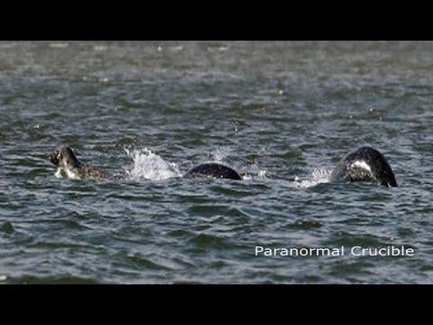 The Loch Ness Monster Finally Found?