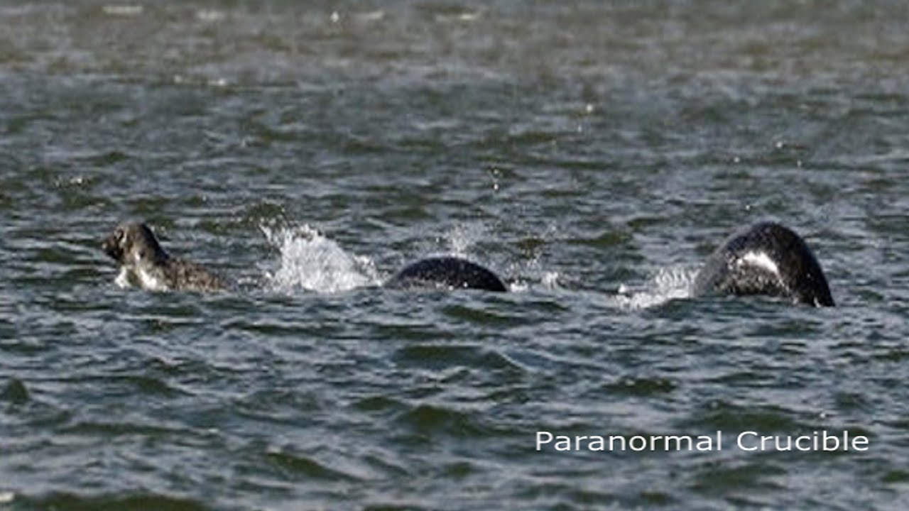 a report on the loch ness monster mystery in scotland The mystery of the loch ness monster has taken another twist  experts reported that scotland's beloved loch ness monster may  to see all content on the sun,.
