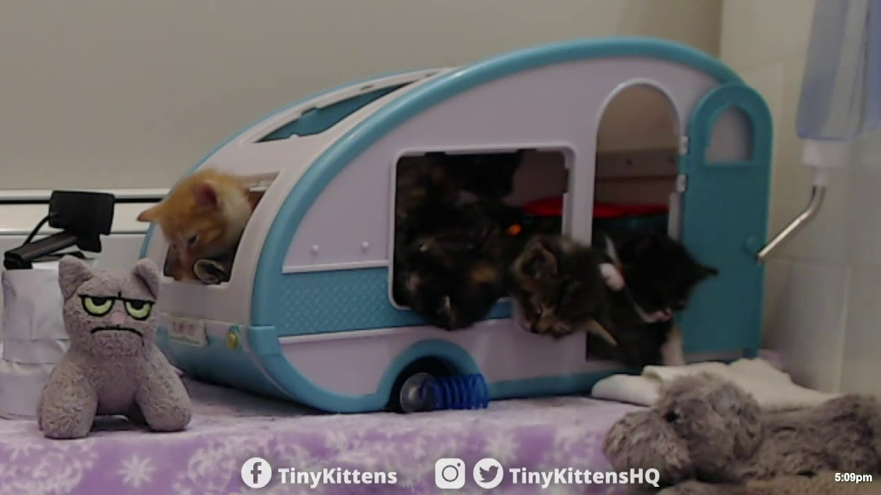 How many tiny kittens can fit into one tiny camper?  ALL of them!  TinyKittens.com
