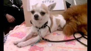 Няшный вложек :3|Выставка собак 2015