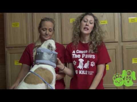 Homemade E-Collar for Dogs - P.E.T.S. Clinic - Wichita Falls, Texas