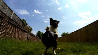 Border Collie Puppy - Gopro + Twixtor
