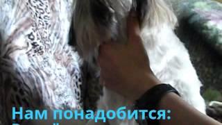 Как сделать причёску для собаки породы Ши-тцу.Очень просто и быстро.