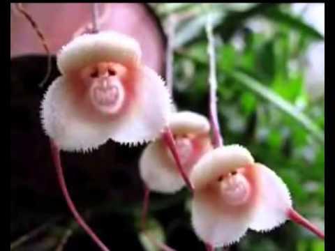 top 20 des plus belle fleurs du monde