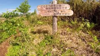 6月の雨竜沼湿原と南暑寒別岳