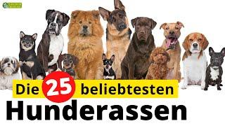 Top 25  Die beliebtesten Hunderassen