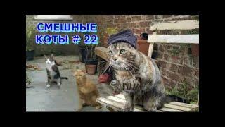 Приколы с кошками и котами #22. Подборка смешных и интересных видео с котиками и кошечками 2017