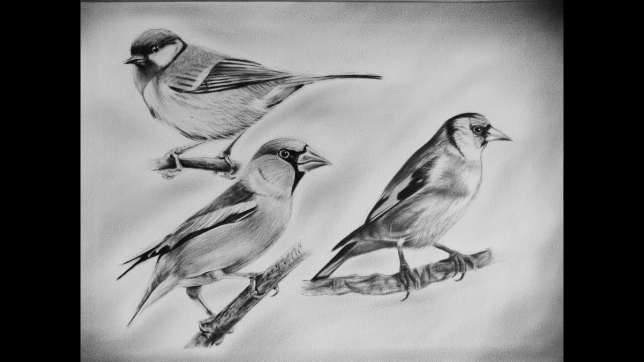 The drawing of birds dry brush with a technique oil with a ...