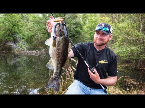 Bank Fishing Ponds for Bass