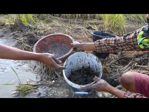 National Fishing - A father & Son Catch a lots of Mud Fishes in the Dry Canal - Save Small Fishes