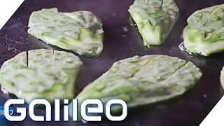 Wird Kaktus das wichtigste Nahrungsmittel der Zukunft?  | Galileo | ProSieben