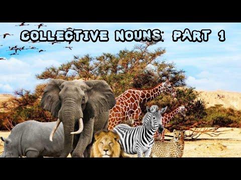 Collective Nouns (Part-1) Animals,birds,mammals.etc- Easy English By Sirajudheen Sali