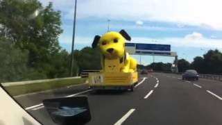 Giant Yellow Dog Loose On Motorway